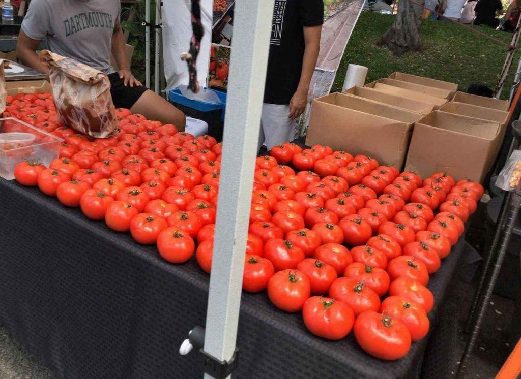 KCC トマト